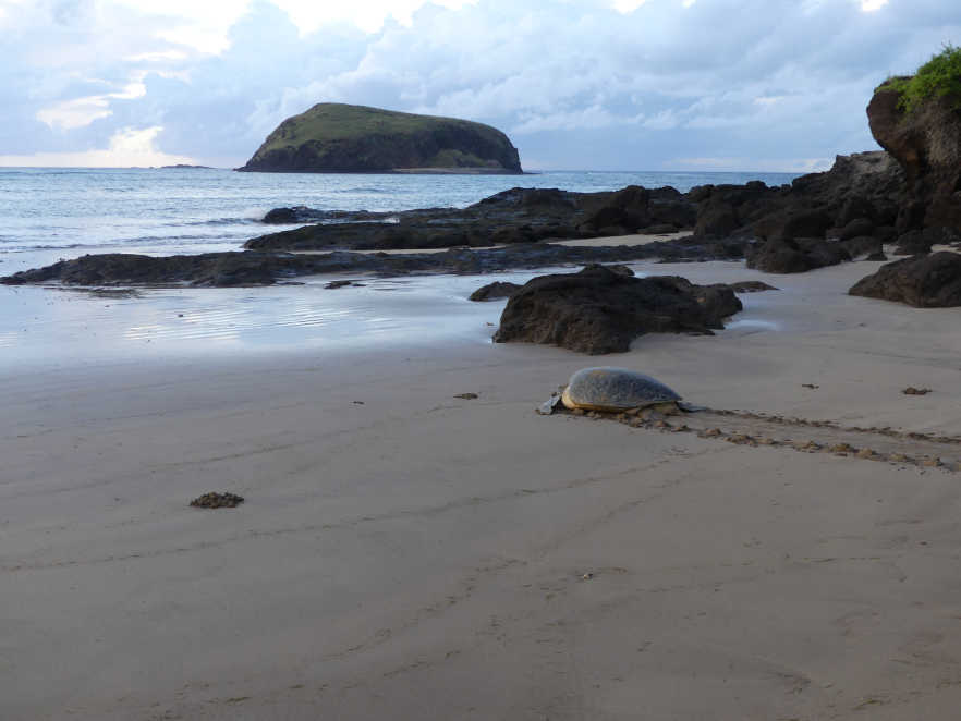 Turtles of Itsamia beach